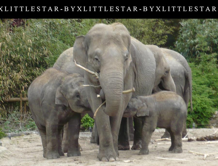 Elephant by xLittleStar