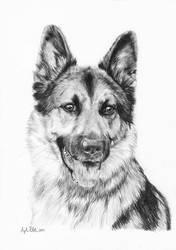 Zac - German Shepherd by Loukya