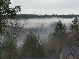 Sunday Fog