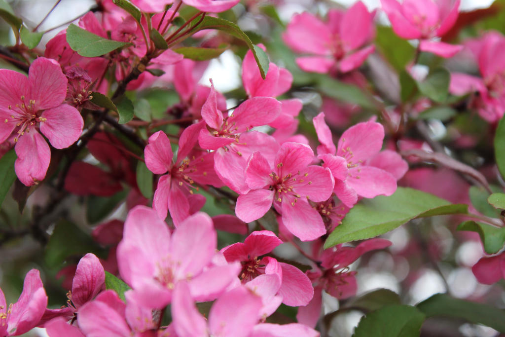 These pink flowers by tinytiina on deviantart these pink flowers by tinytiina mightylinksfo