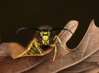Wasp by benas1971