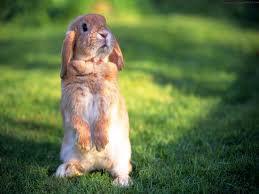 Bunny :D by vety122