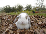 Bunny in a Leaf Pile