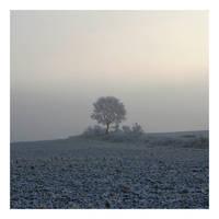 Winter tree by Slawin