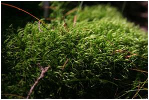 Moss by Slawin