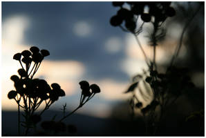 Evening silhouettes by Slawin