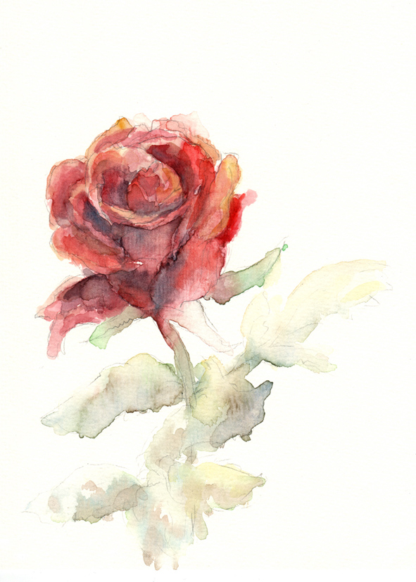 Rose by Ceresta