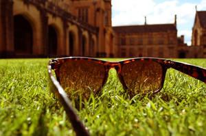 Summer by havehart