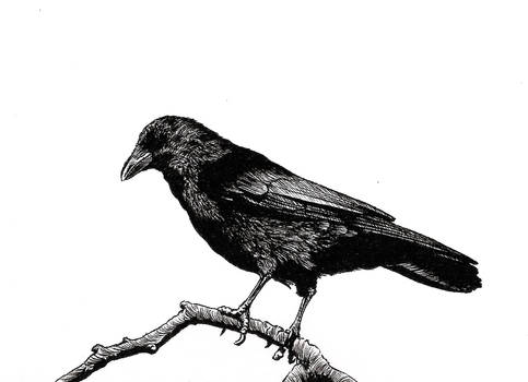 Crows Forever