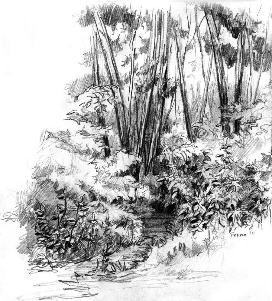 forest sketch by fenna maruda on deviantart