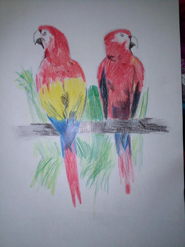 2 Parrots by FlamedMoonwolf