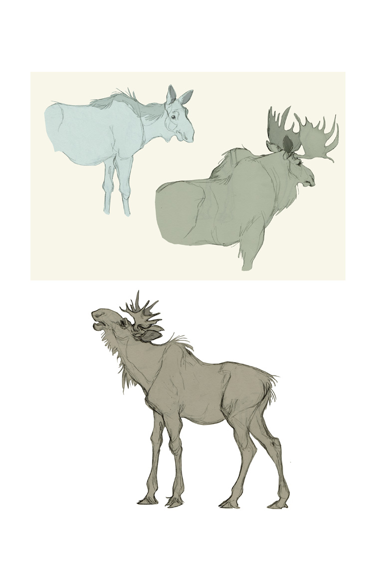 how to draw a realistic moose