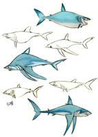 Mako shark by Polarkeet