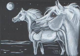 two greys by echdhu