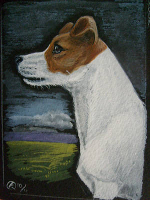 Portrait of a Jack Russell by echdhu