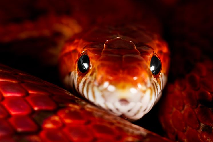fire snake - Luke.M