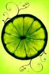 Lime - Luke.M