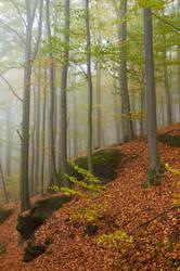 Foggy morning 2 by MarkyF