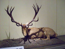 Stag 01 by Axy-stock