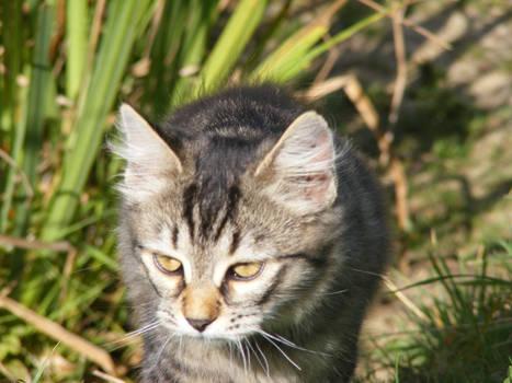Kitten 06