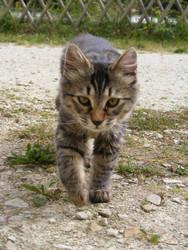 Kitten 16