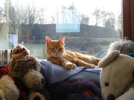 Ginger Cat 04
