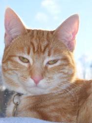 Ginger Cat 05