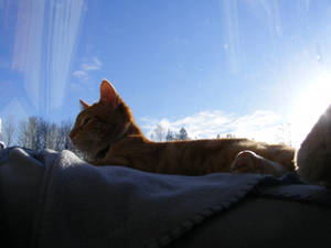 Ginger 06