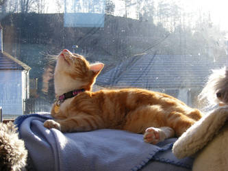 Ginger 07