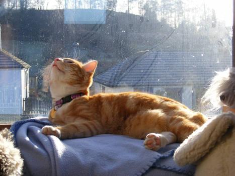 Ginger Cat 08