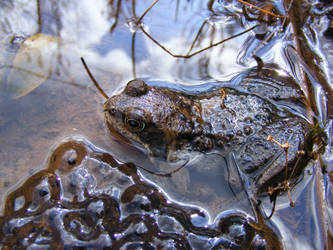 Frog and Spawn 01