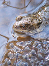 Frog and Spawn 02