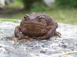 Mr Toad 03 by Axy-stock