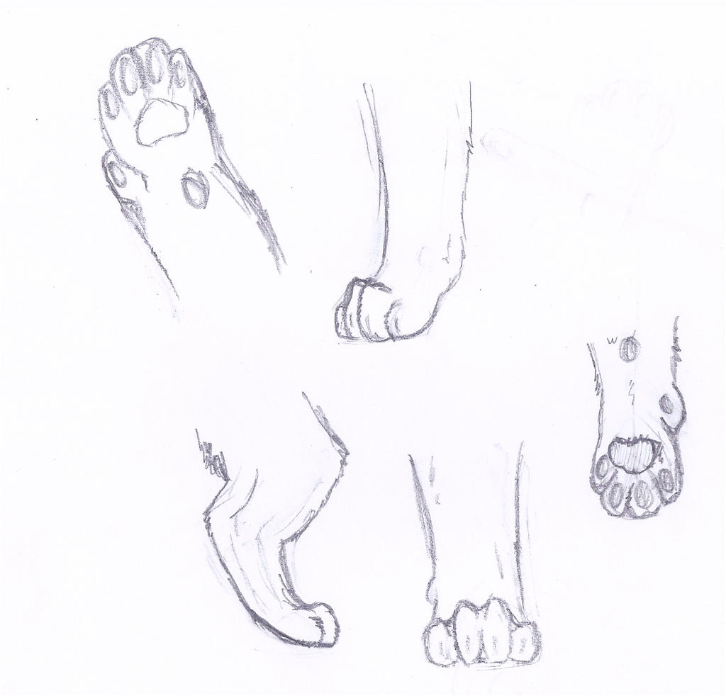 Cat feet anatomy practice by cats11cats on DeviantArt