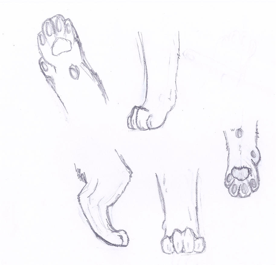 Cat Foot Anatomy Images - human body anatomy