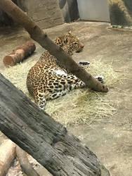 Zoo trip highlights