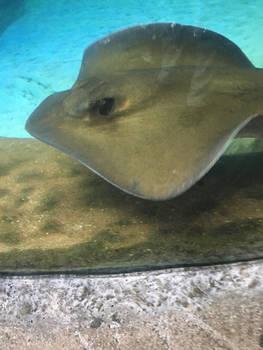 Zoo trip highlight Aqua moment