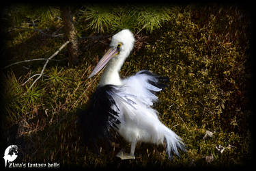 Pelican bird Soft Sculpture by zlatafantasydolls