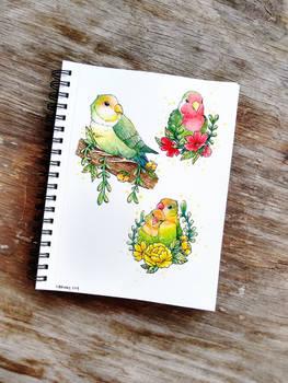 Little Love Birds
