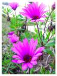 Purple Flowers by Ana-D