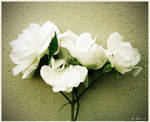 White Roses by Ana-D