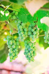 Grapes by Ana-D