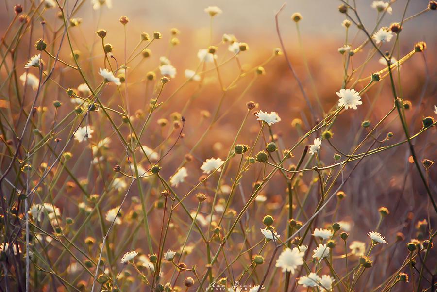 Sunrays by Ana-D