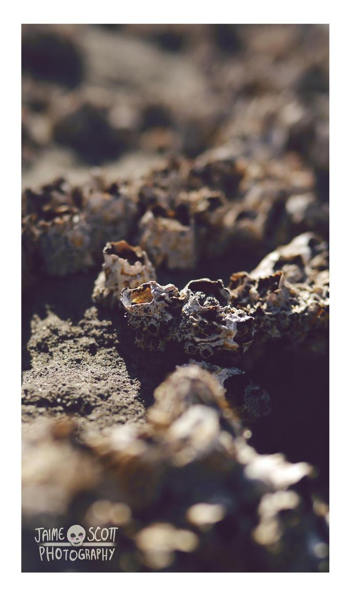 Barnacles by Gliophorus