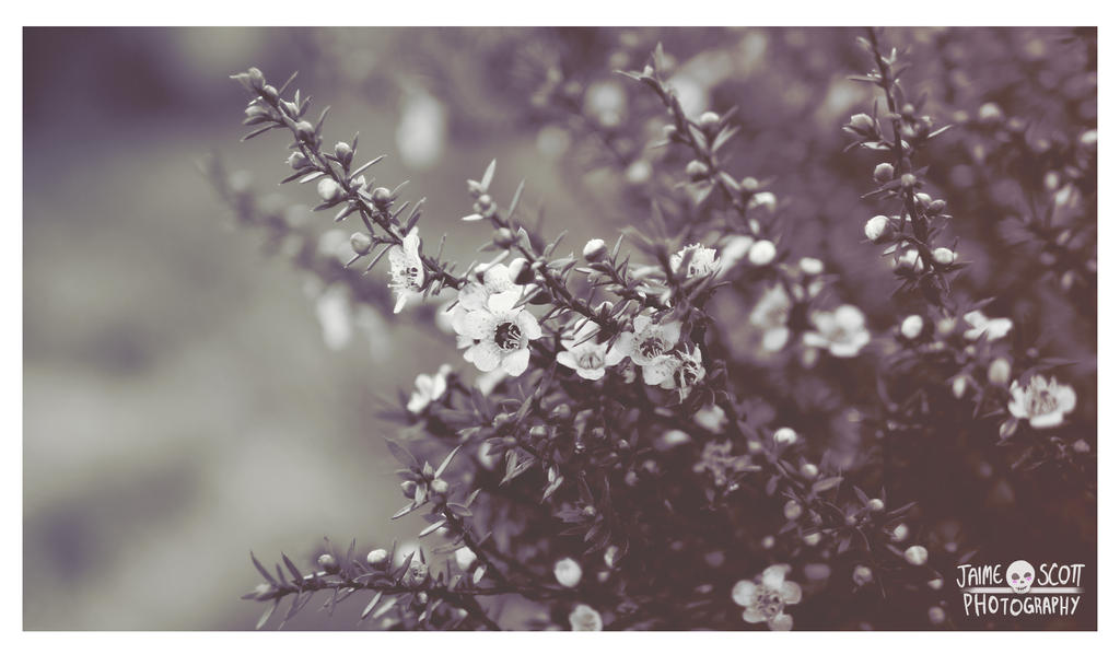 Flowers by Gliophorus