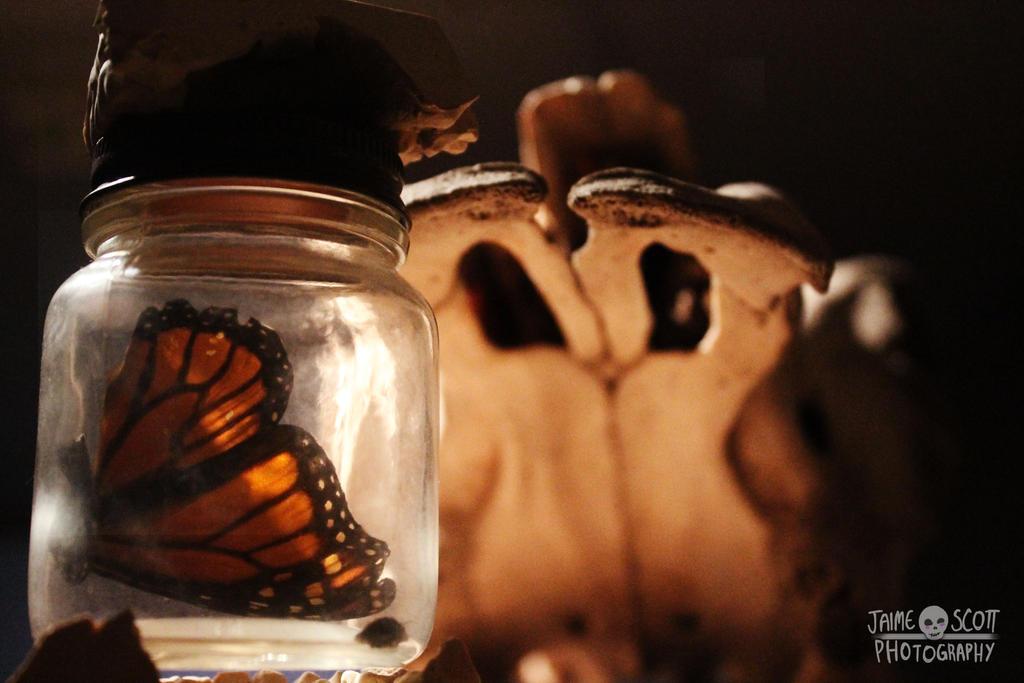 Preserved // Still Life by Gliophorus
