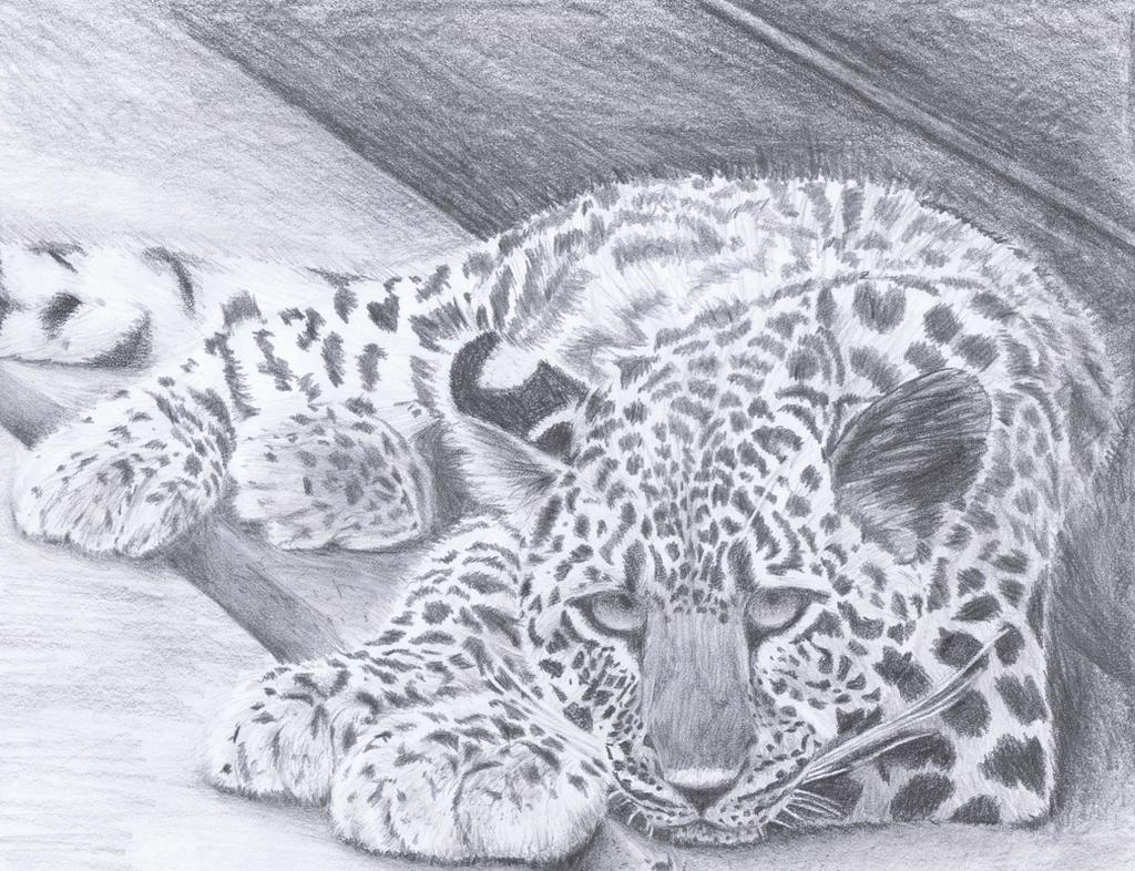 Birthday Leopard by dragongirl76