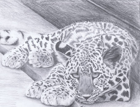 Birthday Leopard