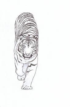The Xmas Tiger
