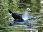 Gull on the Wensum